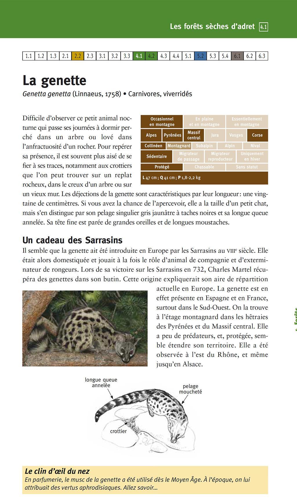 La genette - Guide des animaux de montagne - Parc nationaux de France