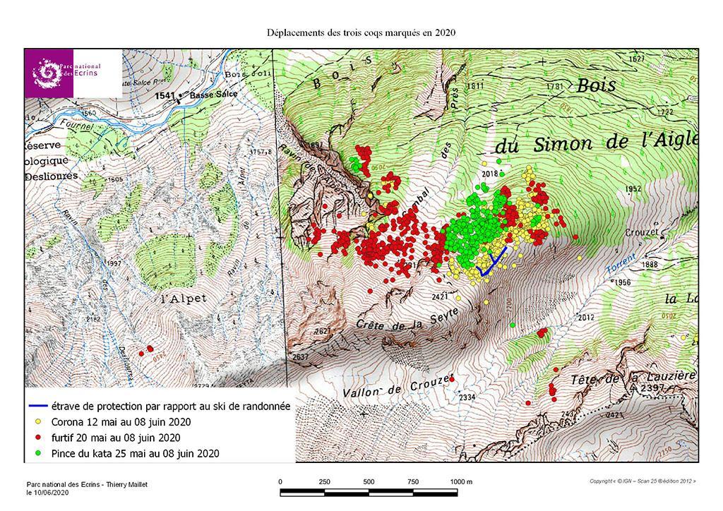 Carte déplacement trois nouveaux coqs - carte tétras lyre Fournel - GPS - Parc national des Ecrins
