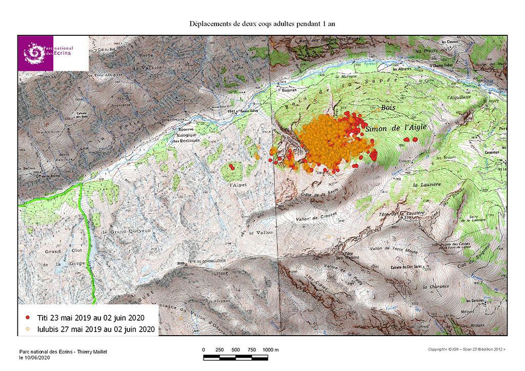 Déplacements Titi et Lulubis - carte tétras lyre Fournel - GPS - Parc national des Ecrins
