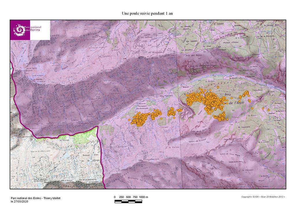 Poule 1 an - carte tétras lyre Fournel - GPS - Parc national des Ecrins