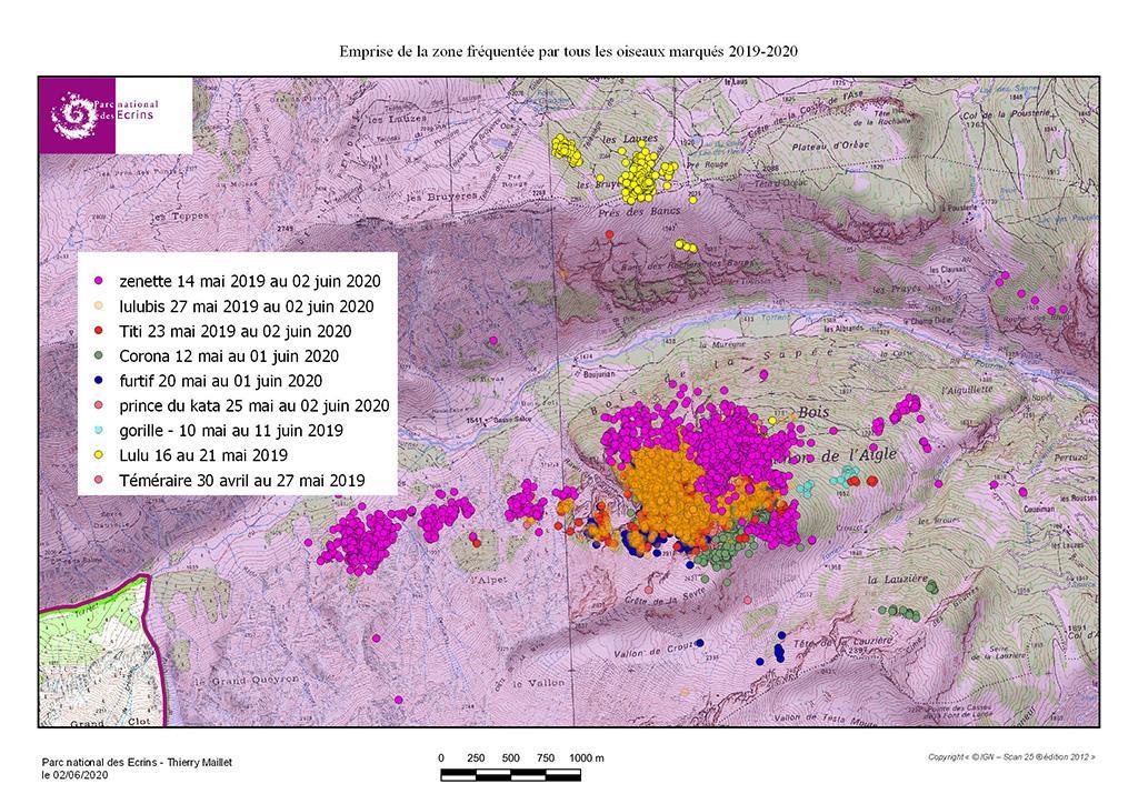 Zone occupée par les oiseaux équipés au 2 juin 2020 - carte tétras lyre Fournel - GPS - Parc national des Ecrins