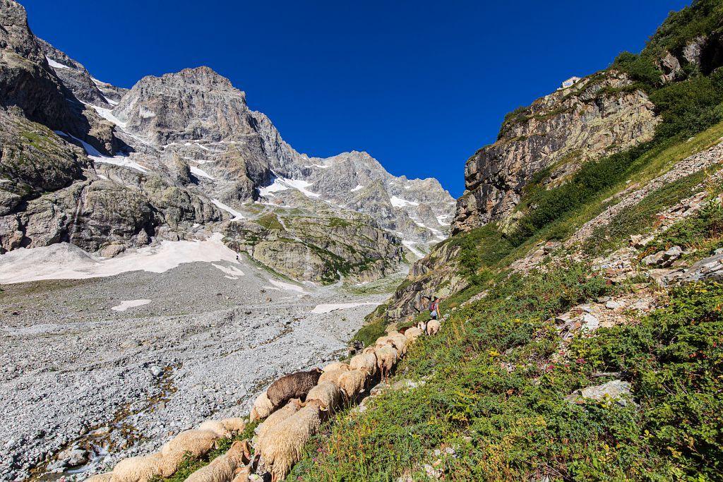 Montée à l'alpage de Peyre Arguet - © T. Maillet - PNE