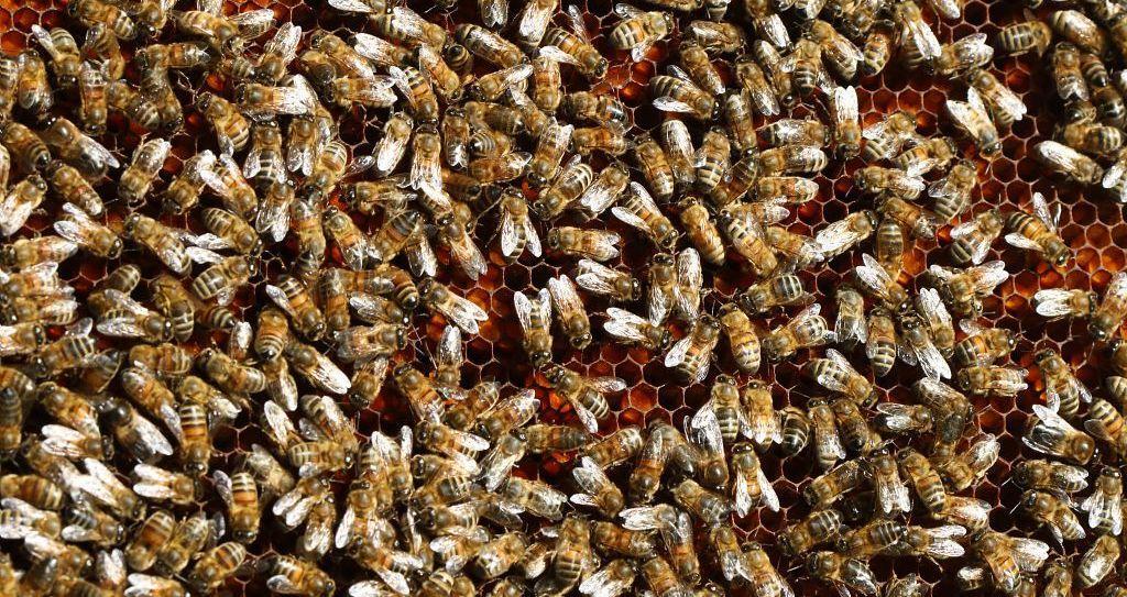 Les abeilles de Jean-Jacques Daubert - © M. Bouvier - PNE