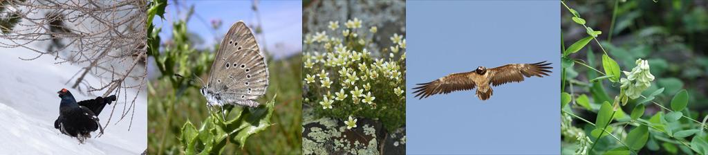 Quelques espèces menacées dans le parc national des Écrins