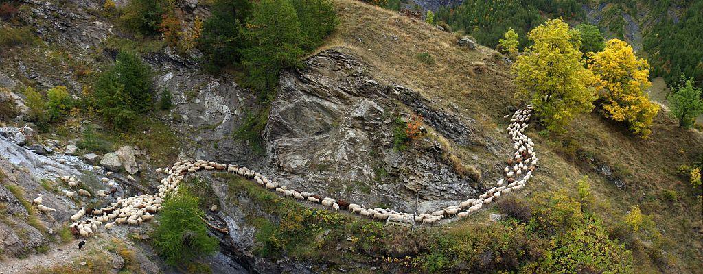 Pastoralisme dans le Parc national des Écrins - © Marc Corail - Parc national des Écrins