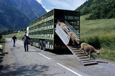 Transhumance en camions © J-P. Nicollet - Parc national des Ecrins