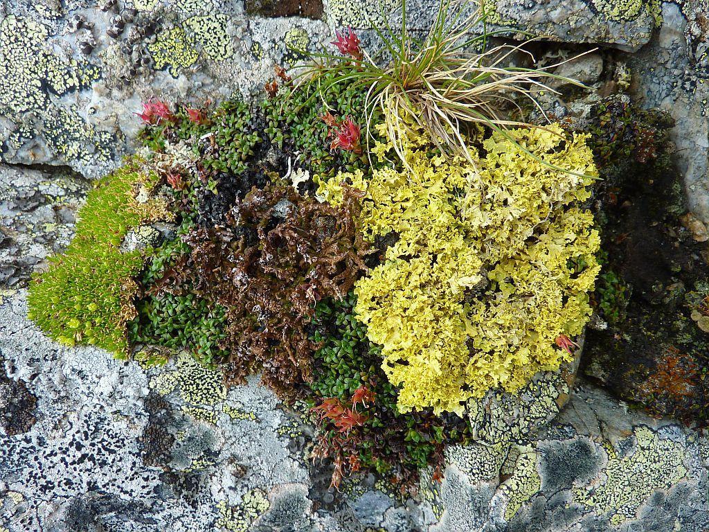 Mousses et lichens ©CoursierCyril