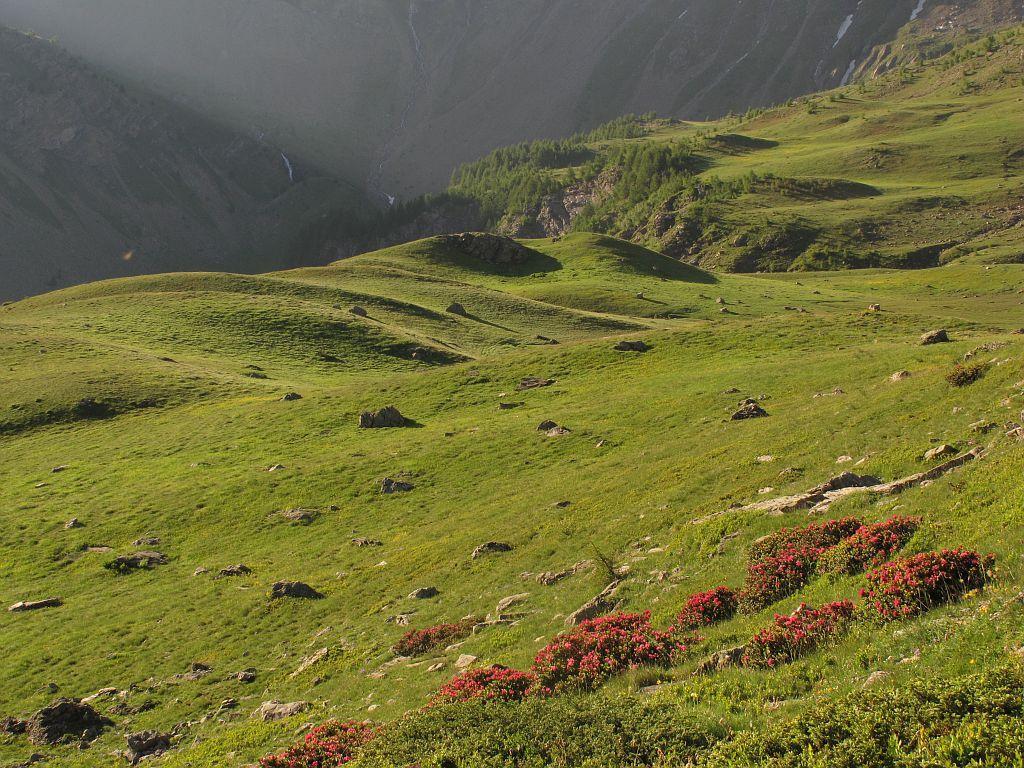 Pré Brunet - Alpage du Saut du Laire - Orcières © Marc Corail - Parc national des Ecrins