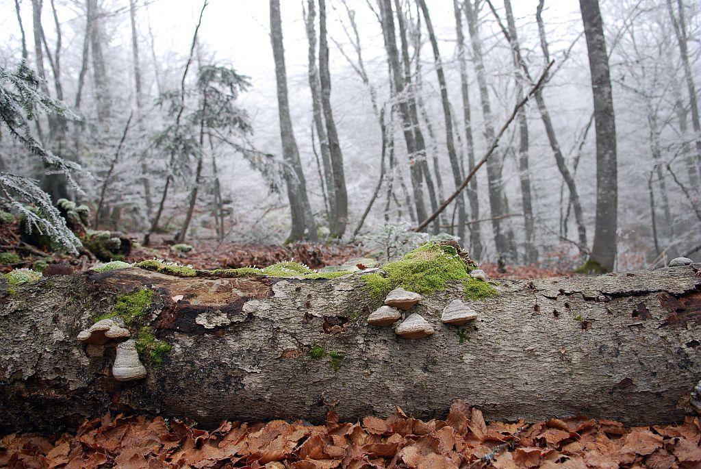 Sous-bois de la forêt de l'Infernet © Jean-Pierre Nicollet - Parc national des Ecrins