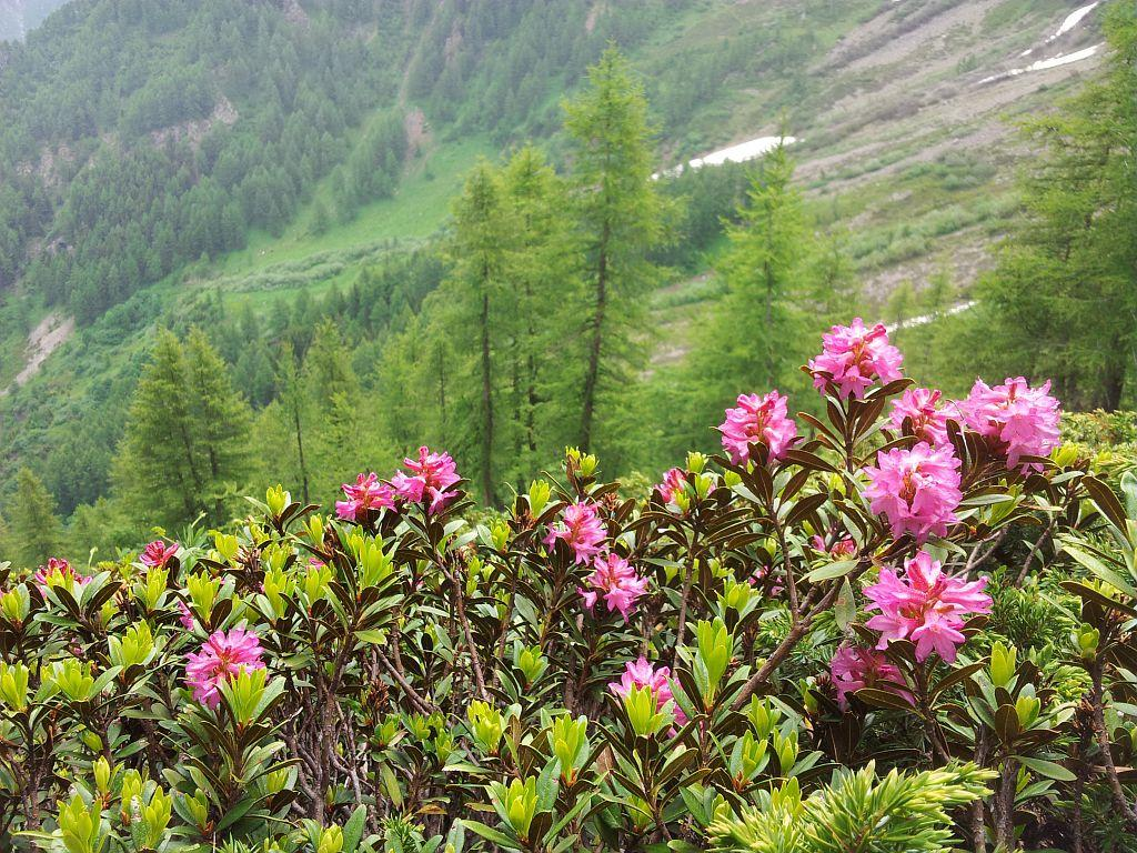 Ambiance vallon de Combe Oursière © Marion Digier - Parc national des Ecrins