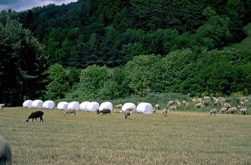 Bocage, agriculture et pastoralisme ©Parc National des Ecrins