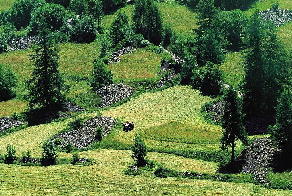 Fenaison sur le Plateau de Charnière ©Bodin Bertrand