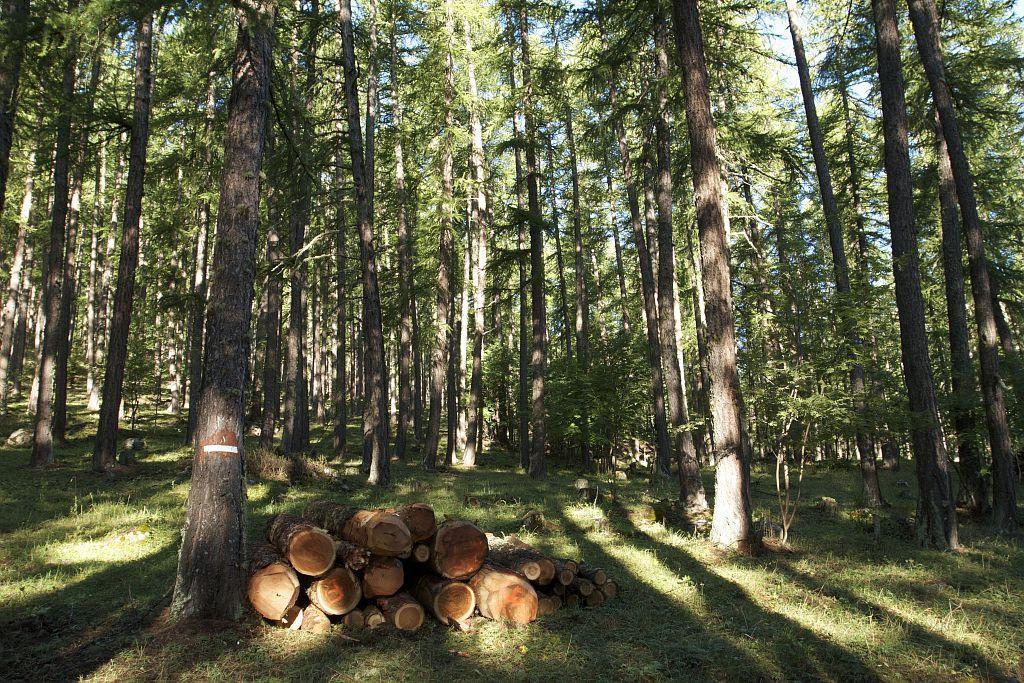ICONO - La forêt - travaux forestiers - filières bois  © Jean-Philippe Telmon - Parc national des Ecrins