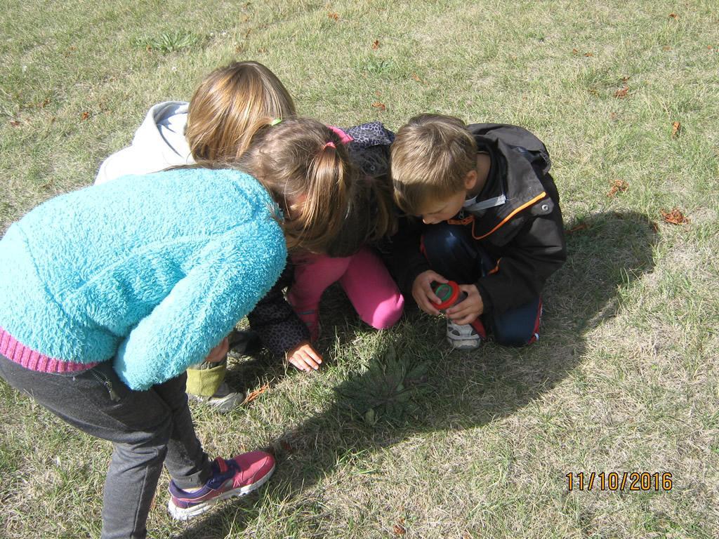 A la découverte des petites bêtes - jeunes découvreurs avec le Parc national des Ecrins - 2016-2017, maternelles l'Argentière la Bessée