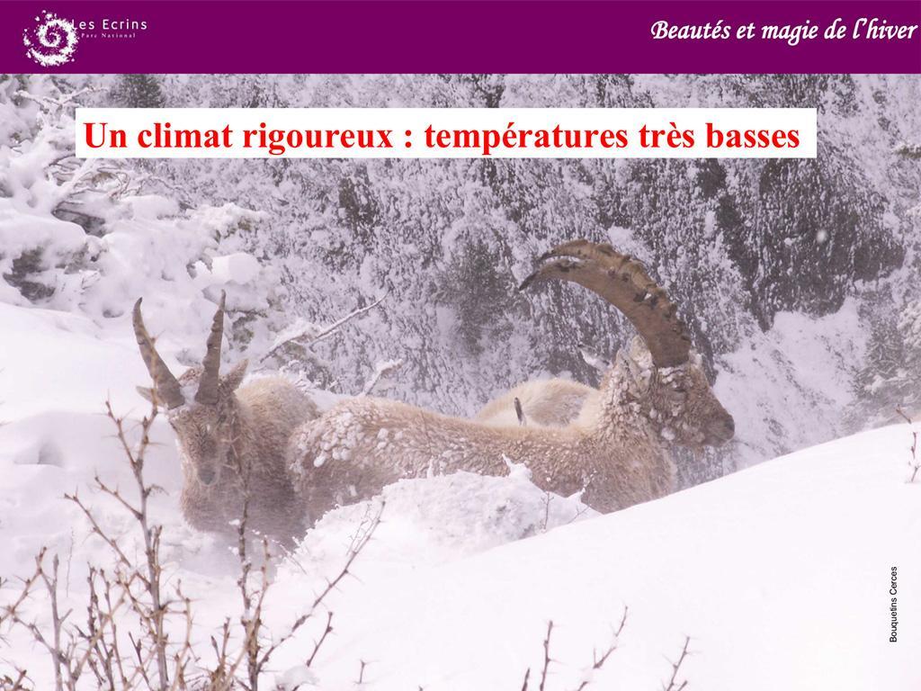 hiver- projet pédagogique Freney d'Oisans avec le Parc national des Ecrins - animaux sauvages - 2017-2018