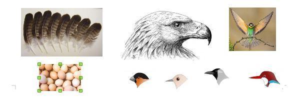 ecole l'Argentière la bessée - 2017/2018 - les oiseaux avec le Parc national des Écrins