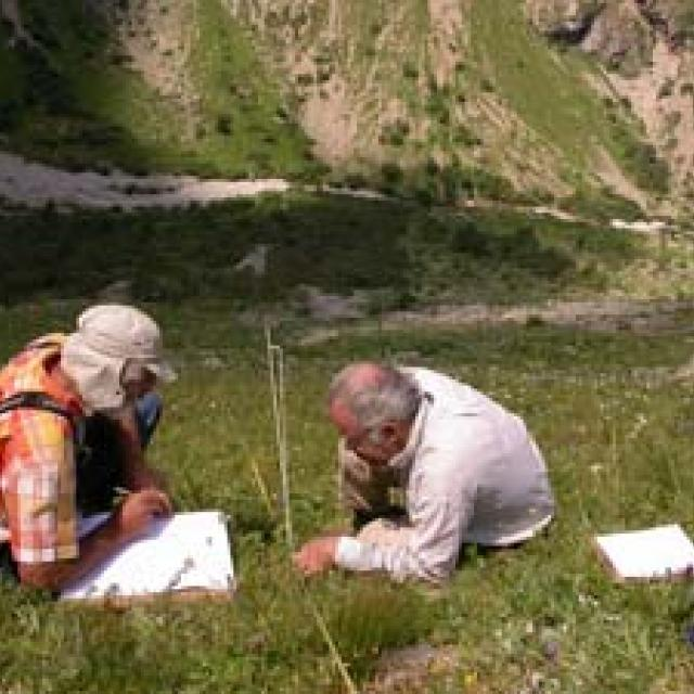 ligne de lecture de la végétation - Parc national des Ecrins