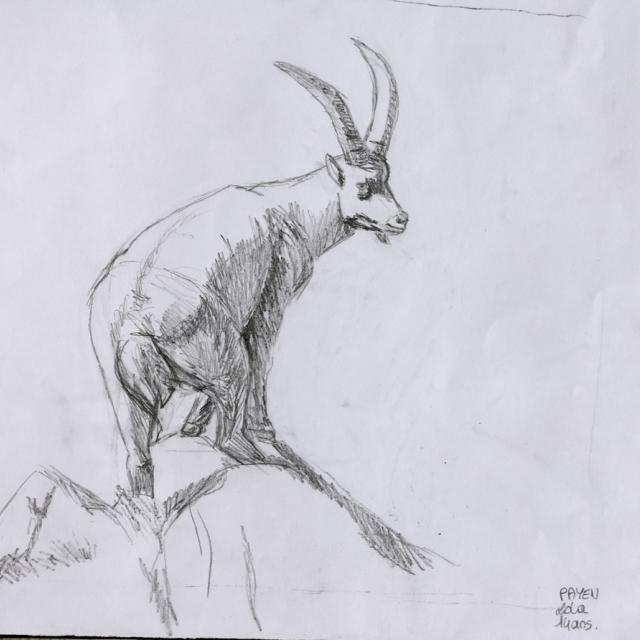 Lola Payen - prix ados concours de dessin hivers 2015 - Parc national des Ecrins