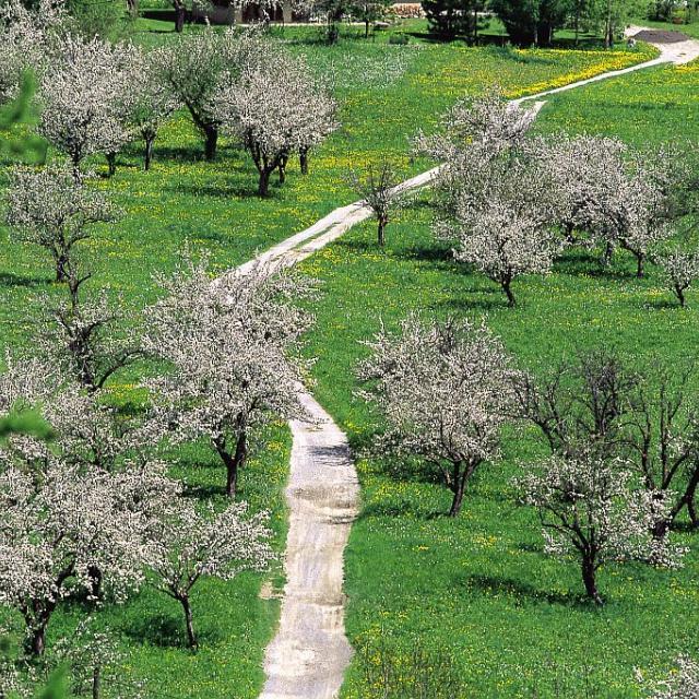 Verger © B.Bodin - Chambre d'agriculture 05 - Parc national des Écrins