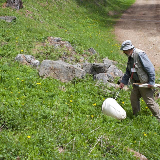 Pierre Frapa, entomogie aux Fontainiers - photo J.Charron - Parc national des Ecrins