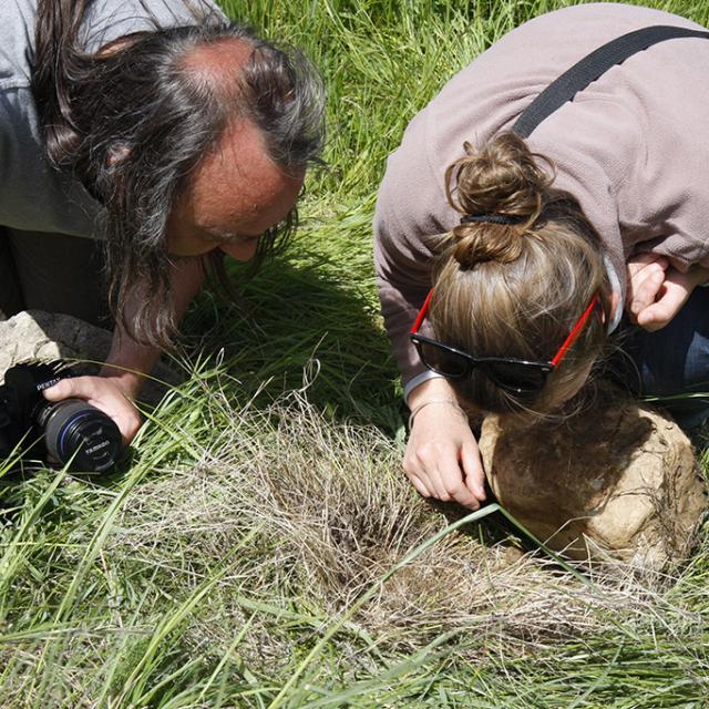 Fête biodiversité Embrun - mai 2016 - malacologie - © Cl-Gondre - Parc national des Écrins