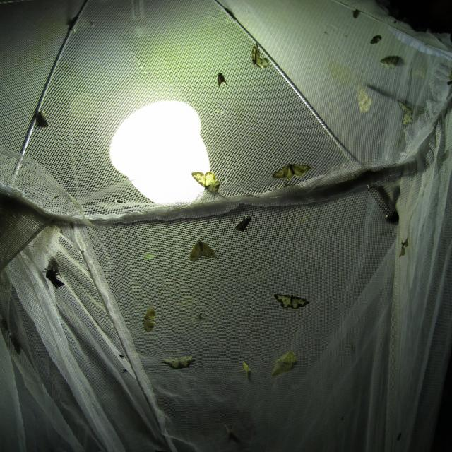 Piége papillons de nuit  -réserve intégrale du Lauvitel - Parc national des Ecrins
