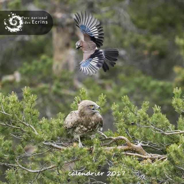 calendrier - Parc national des Ecrins