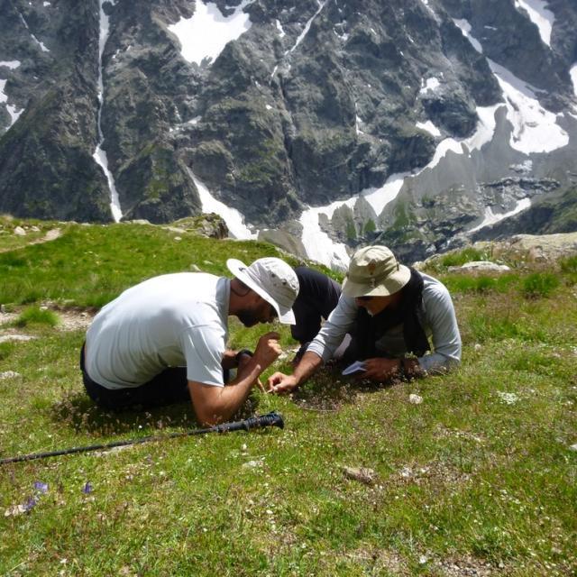 herborisation pelvoux