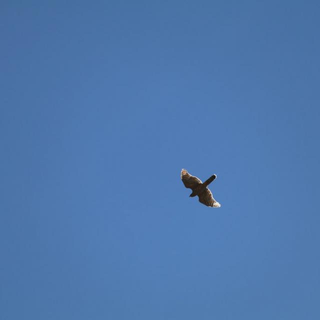 Autour des palombes Comptage migrateurs - Embrunais - août 2016 © Laurent Rippet - Parc national des Ecrins