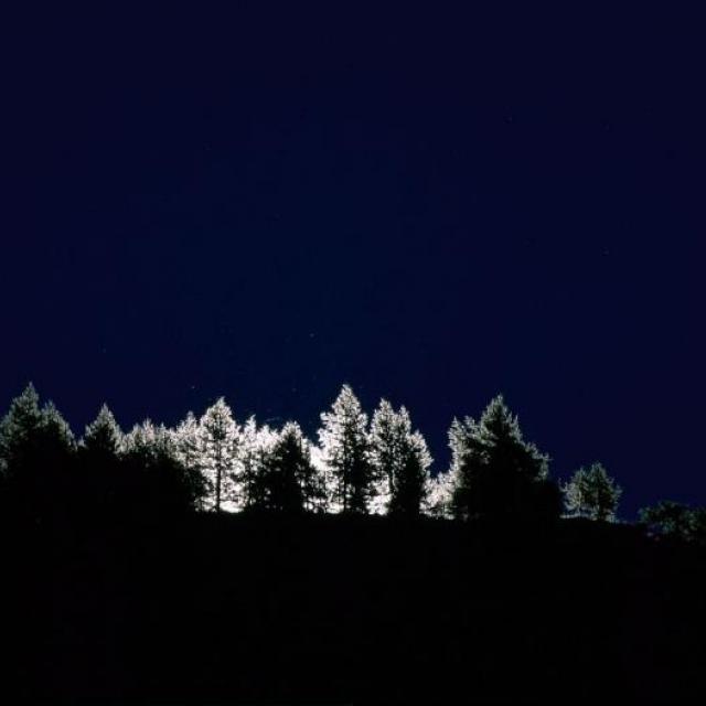 forêt de nuit - © M.Coulon - Parc national des Ecrins