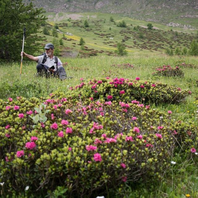 Protocole habitat tétras lyre - diagnostic © Parc national des Écrins