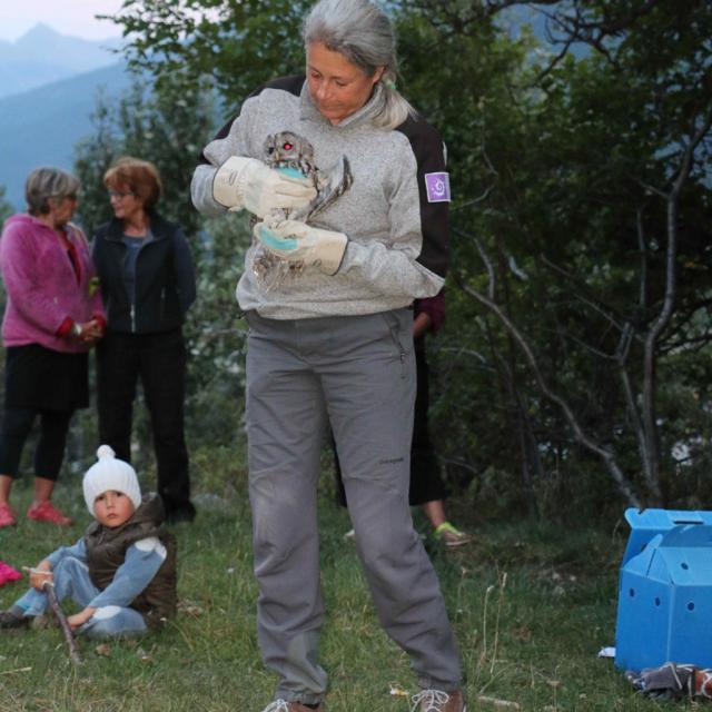 lâcher chouette hulotte au Monêtier-les-Bains - 16 août 2017 - © B Mehran - Parc national des Écrins