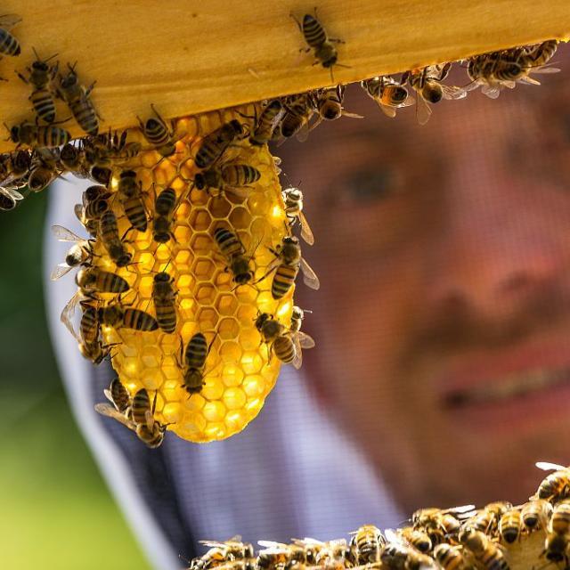 Mathieu Picabet, apiculteur - Miel Esprit parc national - © B.Bodin - Parc national des Ecrins