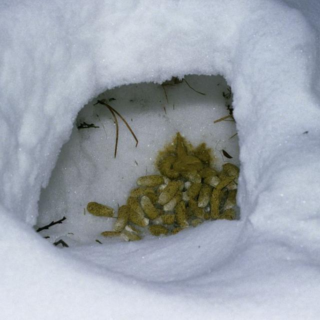 niche et crottes tétras - © JP NIcollet - Parc national des Ecrins