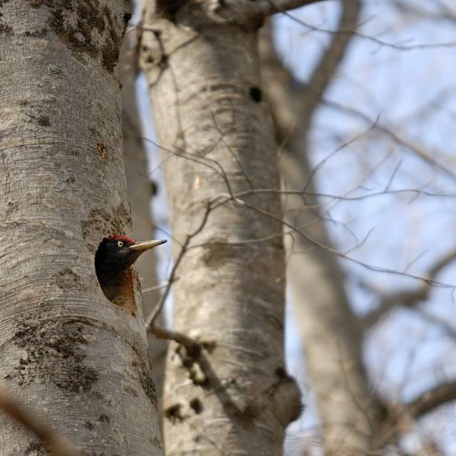 Loge avec pic noir © M.Coulon - Parc national des Écrins