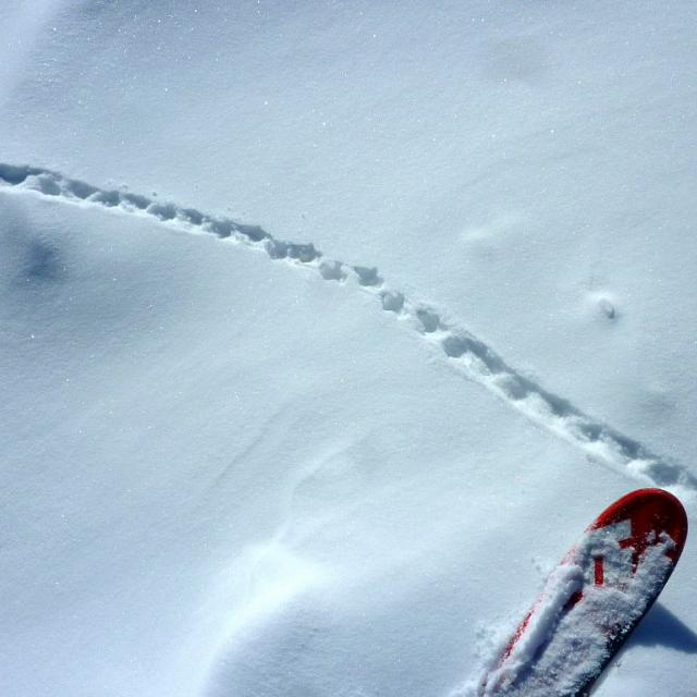 traces lagopède © C Coursier - Parc national des Ecrins