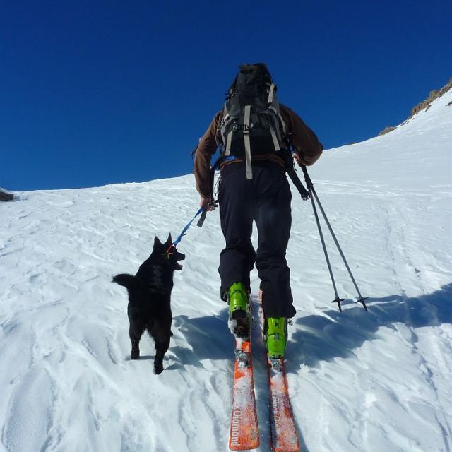 randonneur à ski avec un chien en laisse - © C.Coursier - Parc national des Écrins