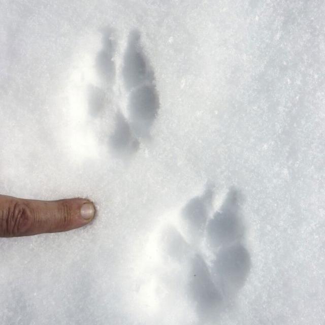 """Animation """"trappeurs - traces et indices"""" Briançon - hiver 2018 - photos C.Coursier - T.Tabainet - Parc national des Écrins"""