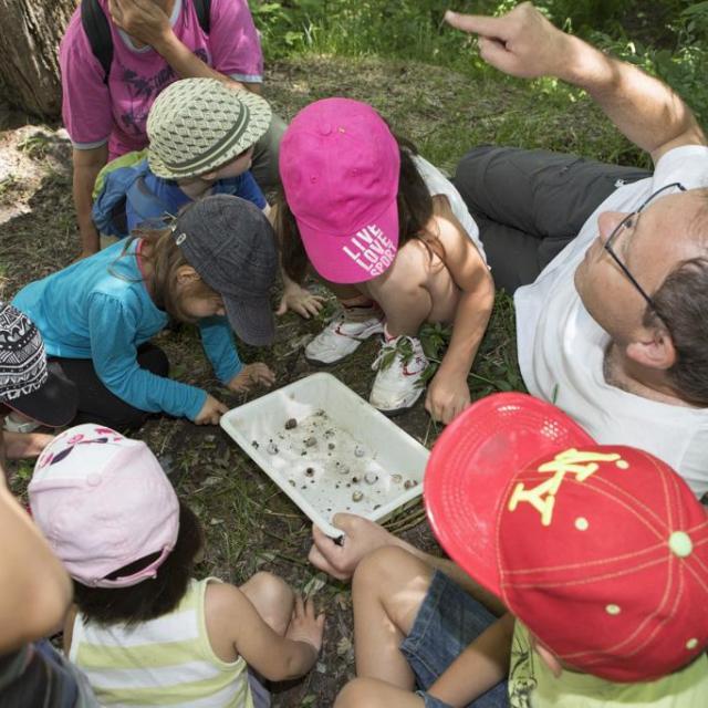 Escargots avec Arianta -Ecrins de nature 2017 - © Pascal Saulay - Parc national des Écrins