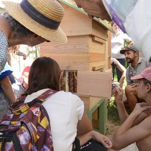 Ruche pédagogique avec Gilles Roche -  Ecrins de nature - juin 2018 Bourg d'Oisans - © Cl.Gondre - Parc national des Ecrins
