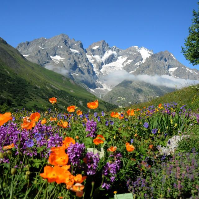 Jardin botanique alpin du Lautaret © R.Douzet SAJF