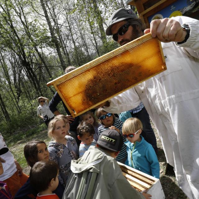 abeille ruche - Ecrins de nature 2019 - Vallouise - photo P.Saulay - Parc national des Ecrins