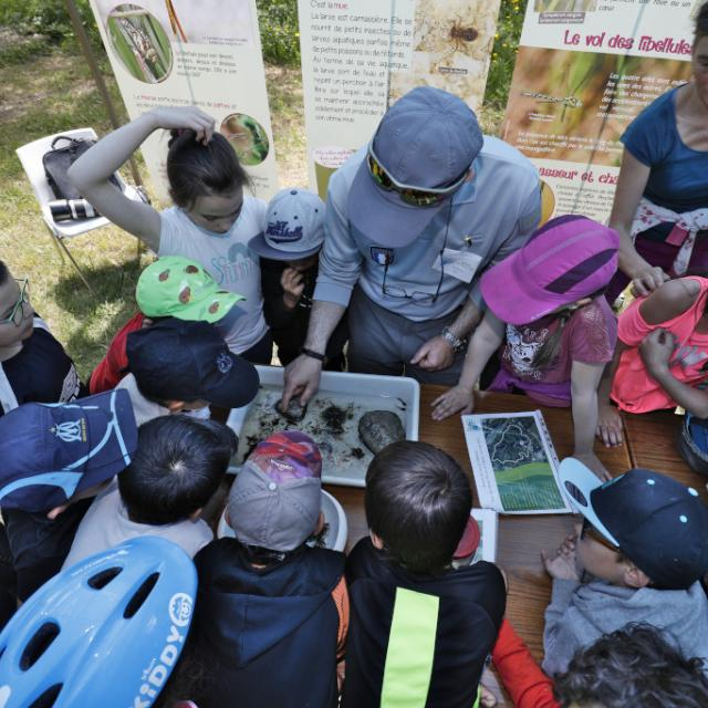 AFB insectes aquatique - scolaires -Ecrins de nature 2019 - Vallouise - photo P.Saulay - Parc national des Ecrins