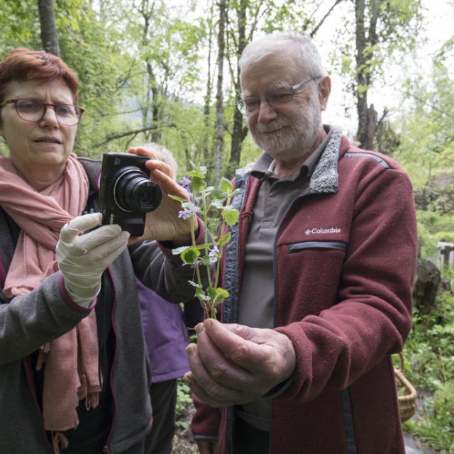 """Cueillette et cuisine sauvage avec le gite """"Au fil de l'onde"""" _ Ecrins de nature 2019 à Vallouise - © P.Saulay-Parc national des Ecrins"""