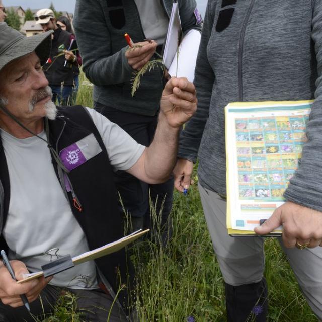 juin 2019 _ Concours prairies fleuries Champsaur - © D.Vincent - Parc national des Ecrins
