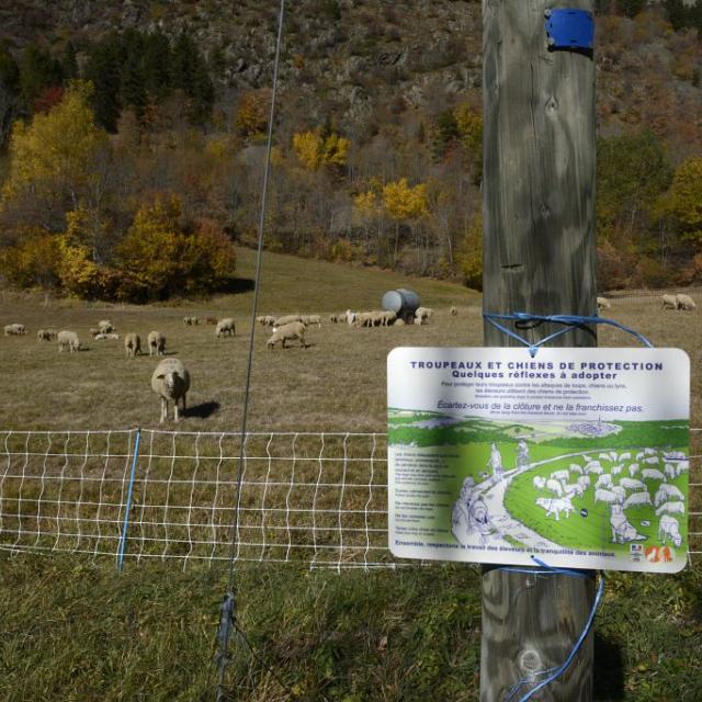 chiens protection- enclos- photo D.Vincent-PNE