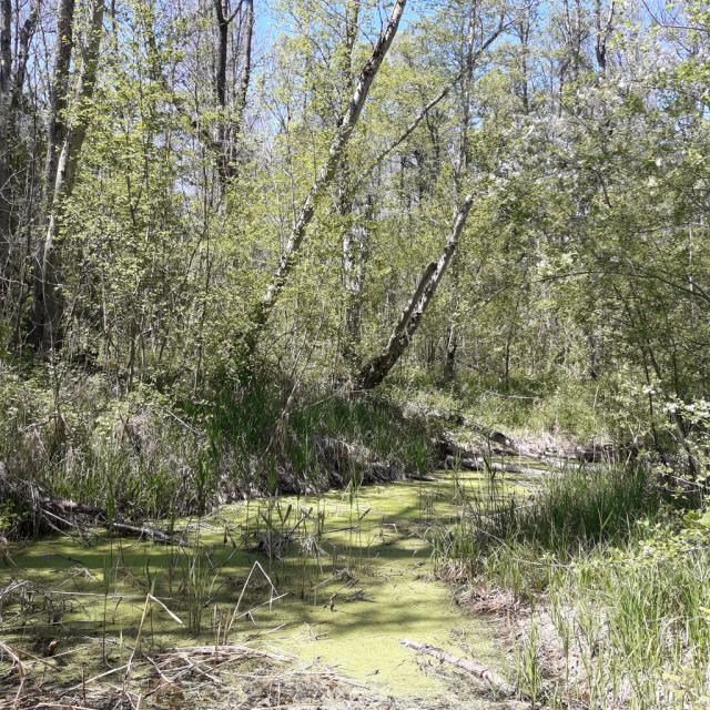 Mare et zones humides - Plaine de Bourg d'Oisans - © F.Giraud - Natura 2000 - Parc national des Écrins