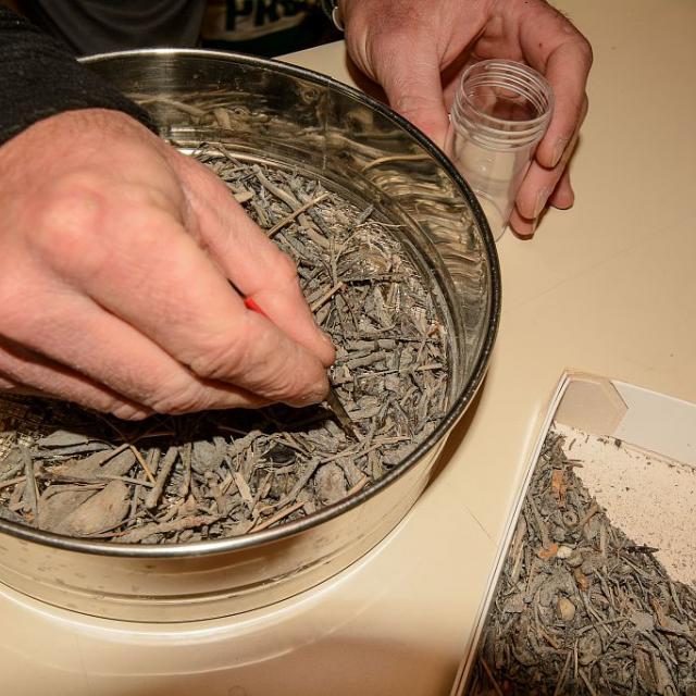 opération de tamisage, pour la recherche d'escargots. © M.Coulon - Parc national des Écrins