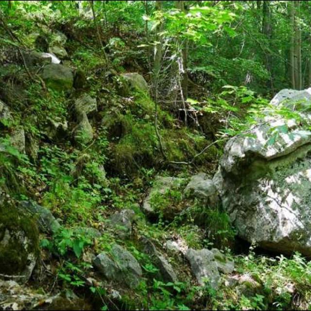 Aperçu de l'habitat de F. interruptus sur la station de Réallon © D. Combrisson - Parc national des Écrins.