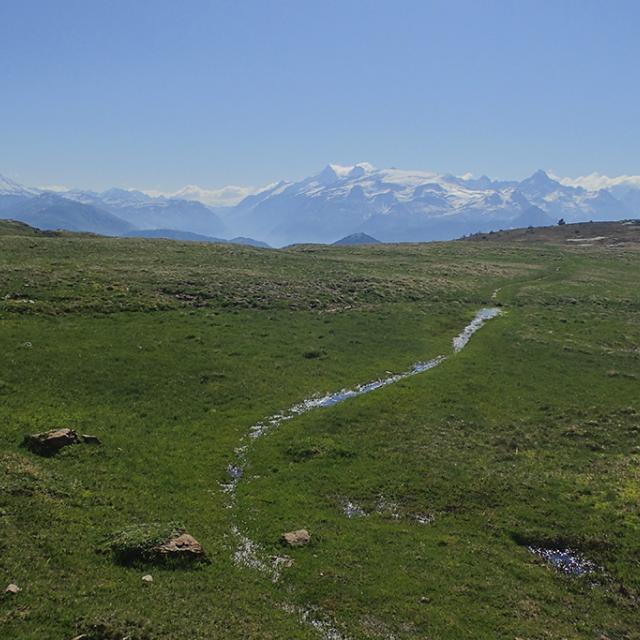 Basse montagne - tourbières - photo Fanny Giraud - Parc national des Ecrins
